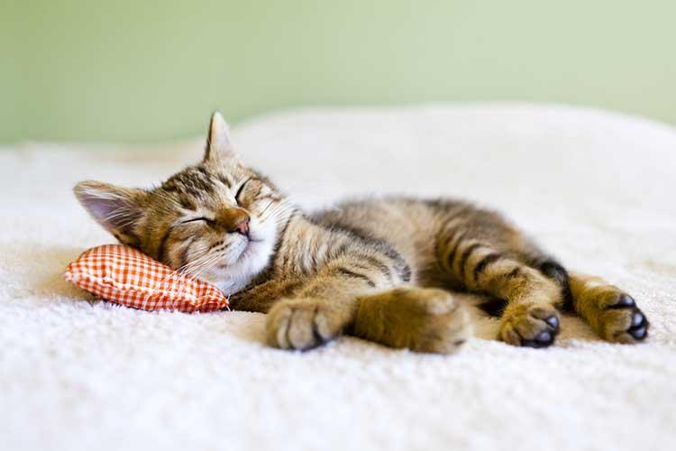 Small Cat asleep on Pocket Spring Mattress